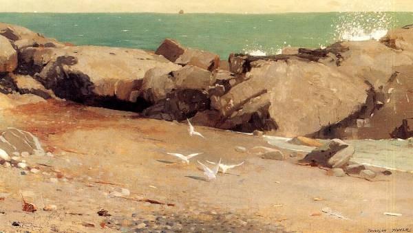 Rocky Coast and Gulls